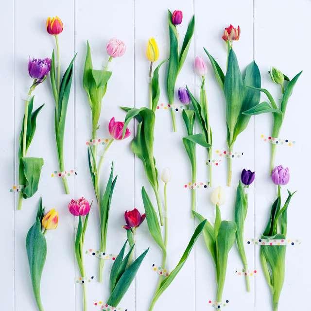 Bunte einzelne Tulpen