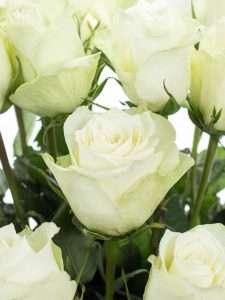 lisianthus eustoma rosita white wei bestellen blumigo. Black Bedroom Furniture Sets. Home Design Ideas