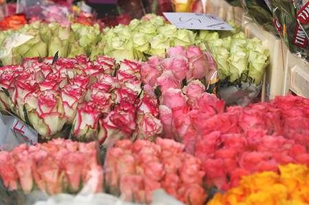Rosen Wochenmarkt Blumen Horstmann
