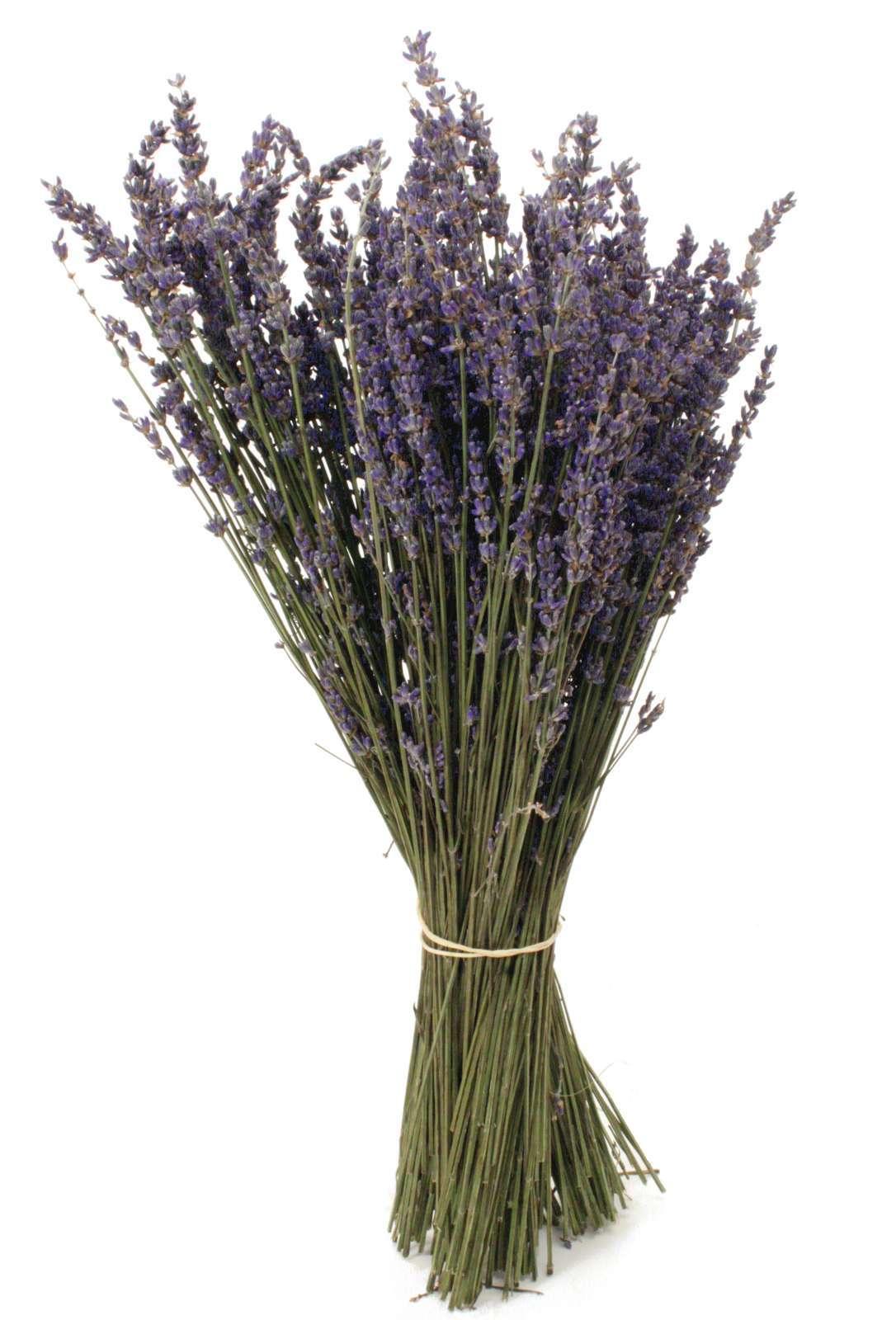 Gemeinsame Getrockneter Lavendel im Bund bestellen | Blumigo #EW_43