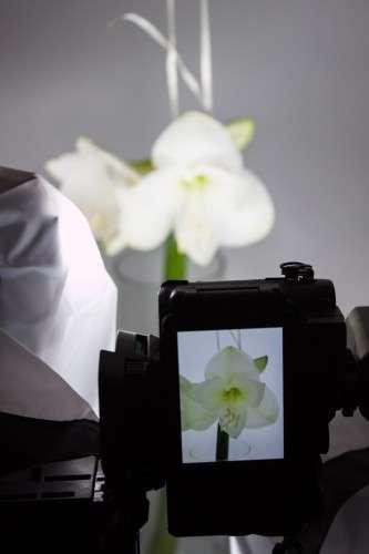 Blumen_Produktfotografie_weiße Amaryllis