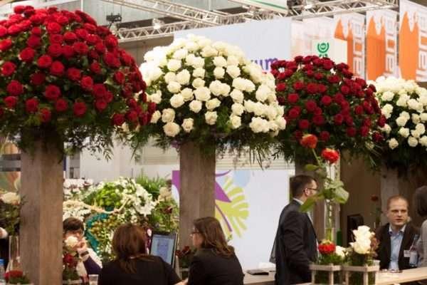 IPM Essen 2016 Rote und weiße Rosenpalmen