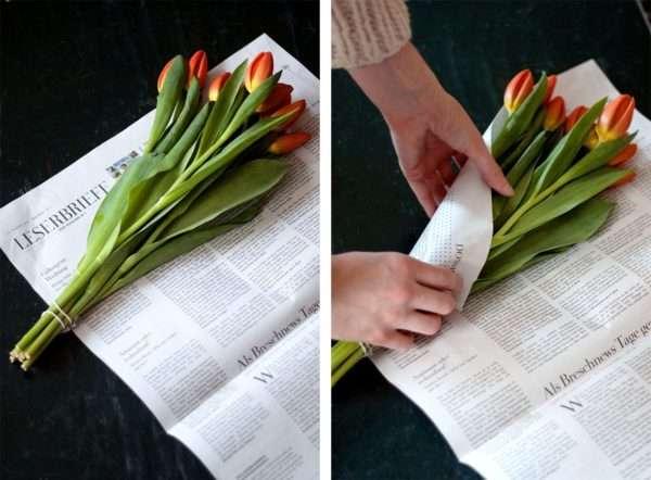 Tulpen Pflege_Tulpen schlapp_Tulpen lassen Köpfe hängen_in Zeitungspapier einwickeln