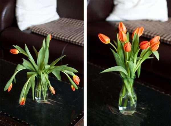 Tulpen schlapp_Pflege_Tulpen lassen Köpfe hängen_orange Tulpen
