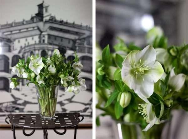Weißer Christrosenstrauß_Blumenstrauß_Schnittblumen_Christrosen in Vase_Blumigo_