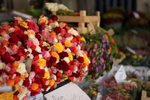 Bunte Rosen auf dem Wochenmarkt Münster Domplatz_Sommerastern