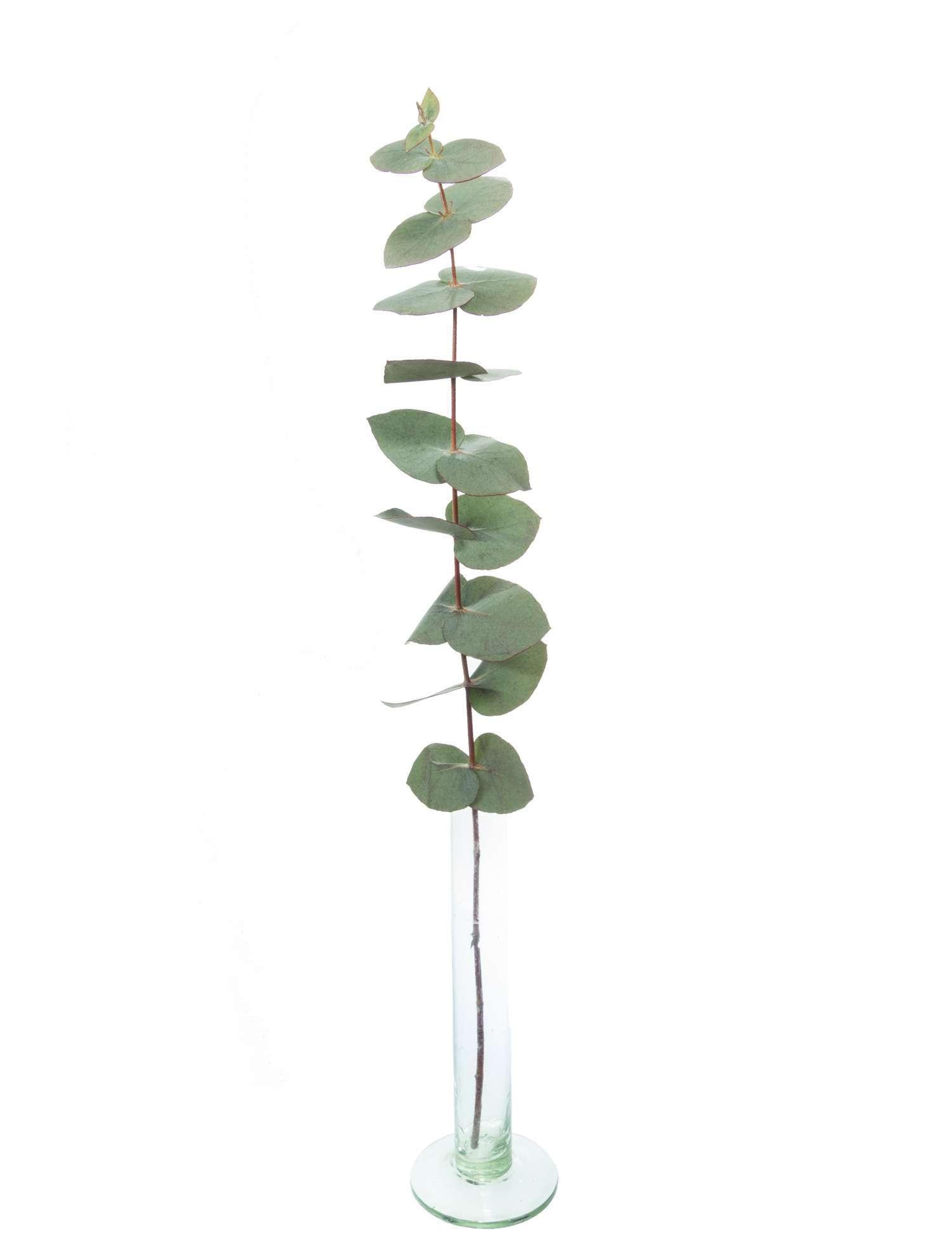 adventskranz eukalyptus kaufen europ ische weihnachtstraditionen. Black Bedroom Furniture Sets. Home Design Ideas