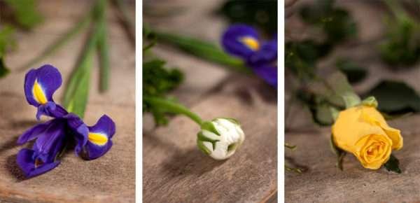 Frühlingsstrauß Zutaten blaue Iris weiße Ranunkel gelbe Rose
