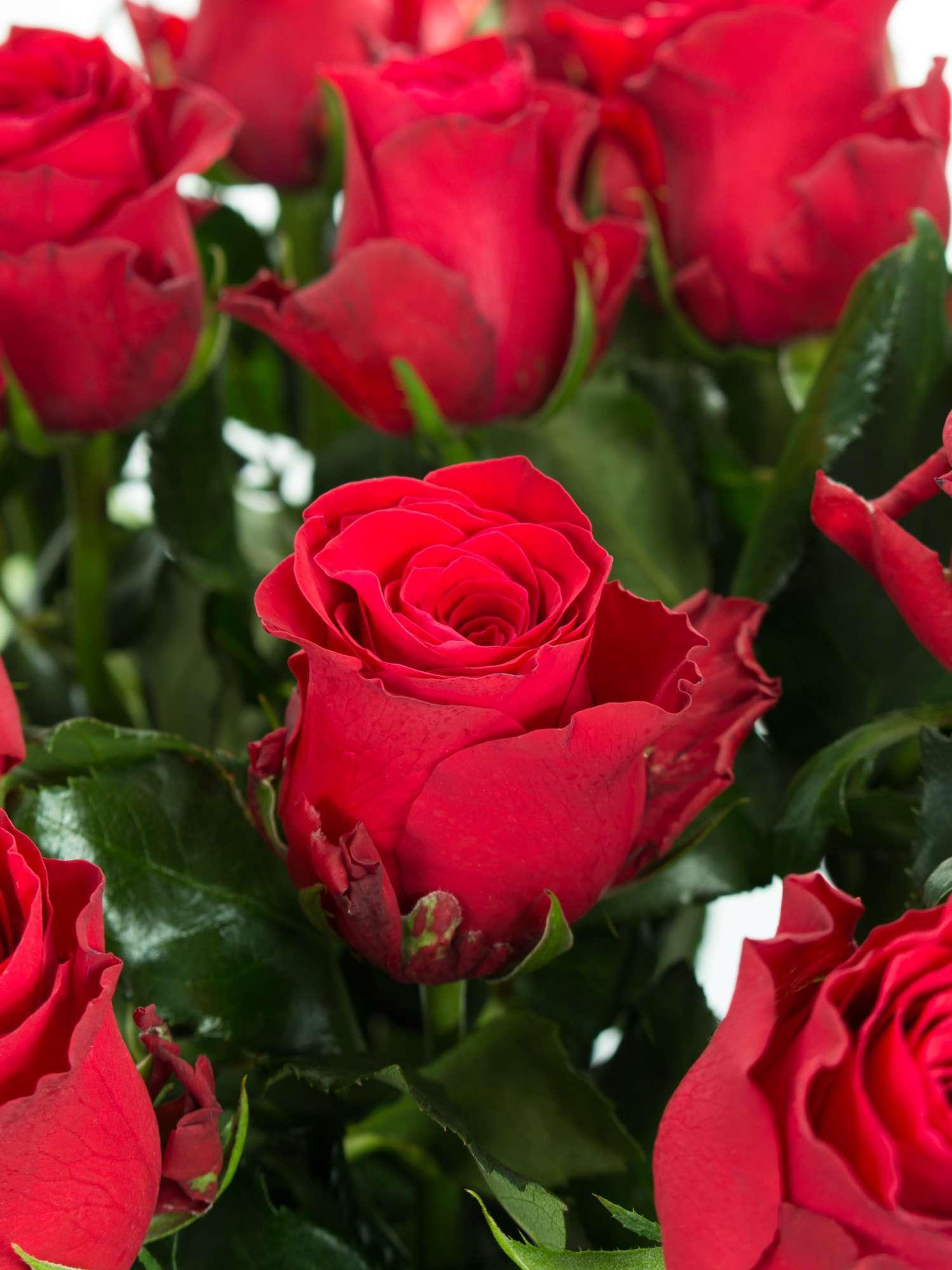 rosen kaufen online excellent seidensatin gemalte rosen with rosen kaufen online good. Black Bedroom Furniture Sets. Home Design Ideas