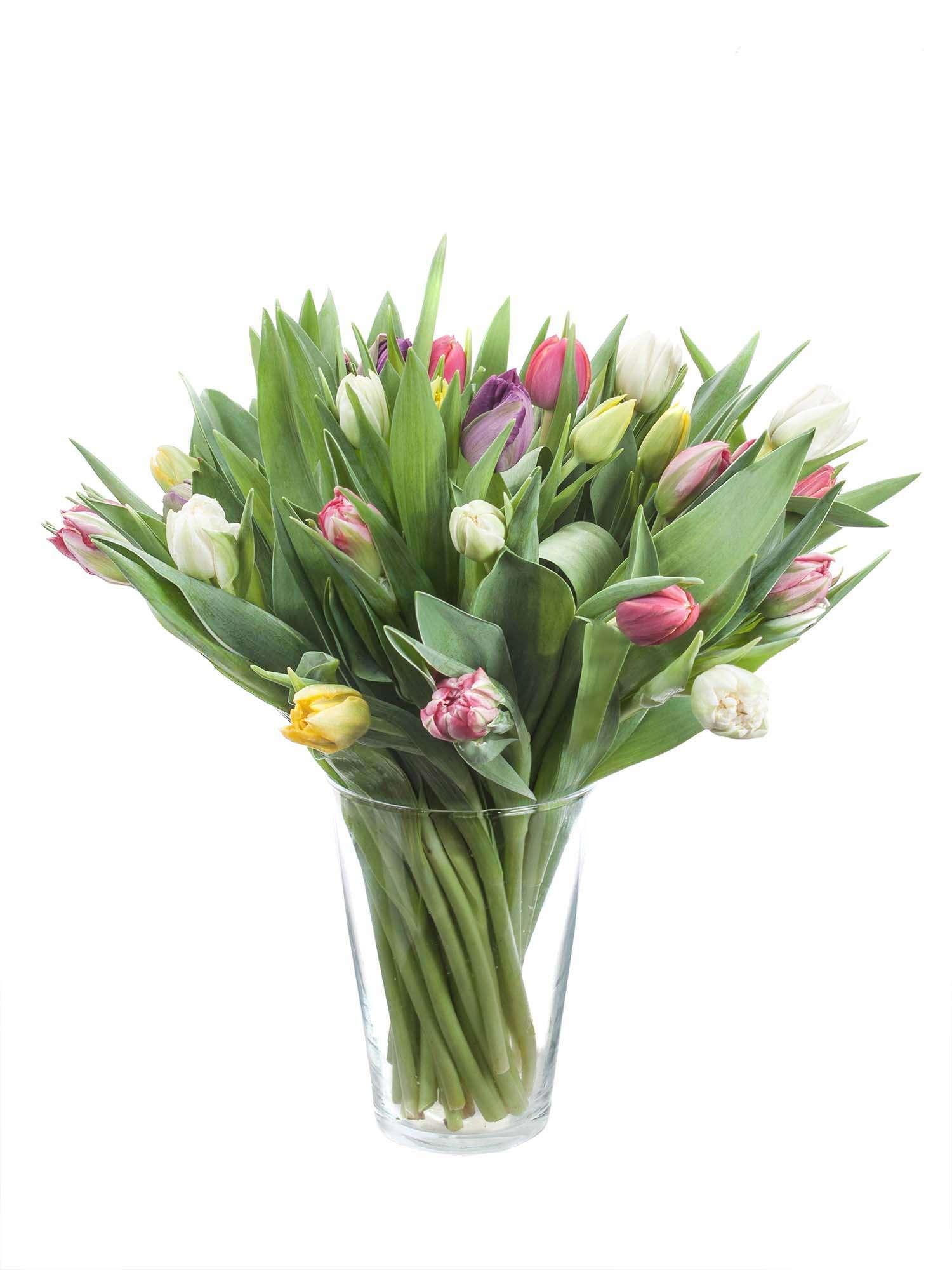 50 Tulpen Exklusiv überraschungsmix Bestellen Blumigo