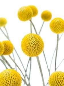 5 tipps um schnittblumen l nger frisch zu halten blumigo. Black Bedroom Furniture Sets. Home Design Ideas