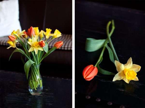 Narzissen und Tulpen zusammen in die Vase stellen_
