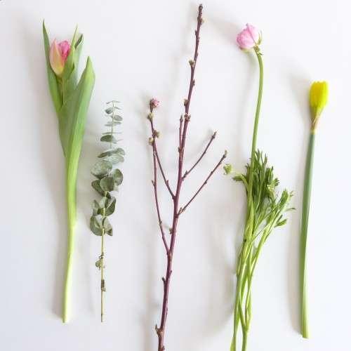Tulpe_Eukalyptus_Pfirsichzweig_Ranunkel_Narzisse