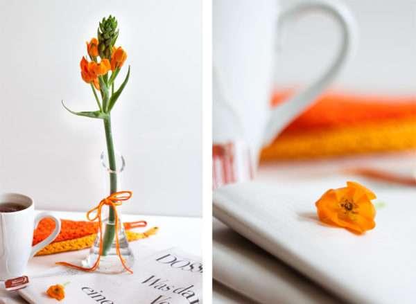 Einzelne Gärtnerschreckblüte orange_Ornithogalum