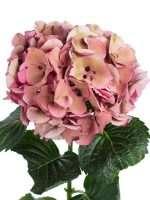 Welche Blumen Gibt Es Im Oktober Schnittblumen Saison Kalender
