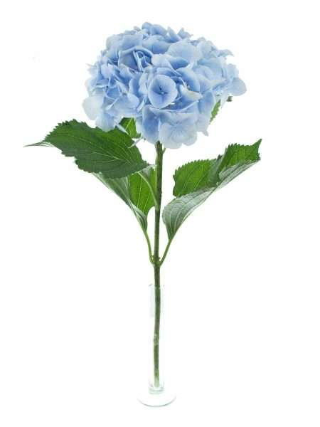 hortensie verena blau hell blau bestellen blumigo. Black Bedroom Furniture Sets. Home Design Ideas