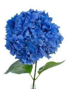 Blumen der saison blumigo for Baldur garten katalog anfordern