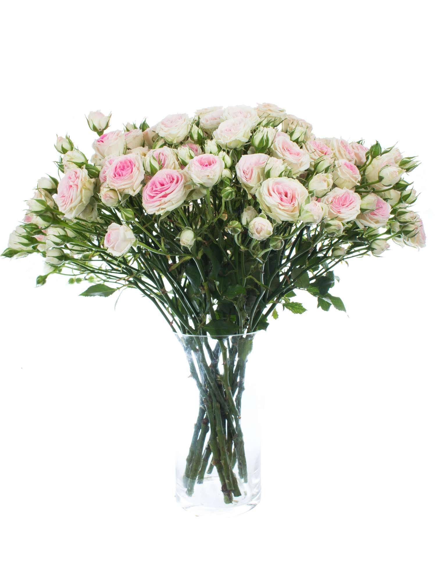 rosen verzweigt mimi eden rosa wei bestellen blumigo. Black Bedroom Furniture Sets. Home Design Ideas