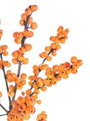 Ilexzweige Oudj in Orange