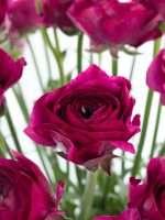 Welche Blumen Gibt Es Im April Schnittblumen Saison Kalender Blumigo