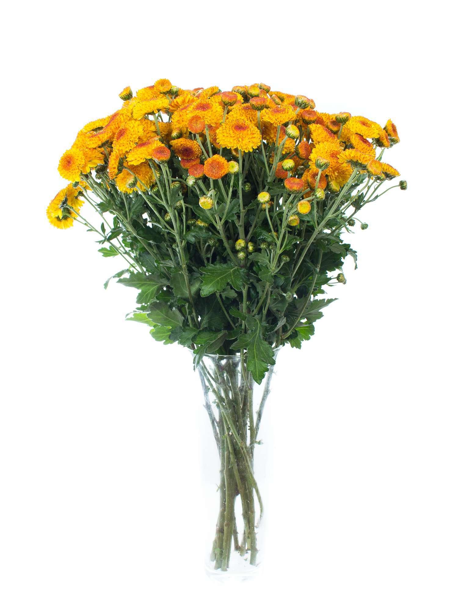 herbstastern bright eye orange gelb bestellen blumigo. Black Bedroom Furniture Sets. Home Design Ideas