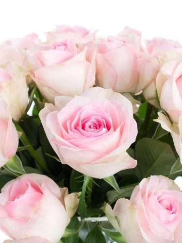 Rosen Avalanche Sorbet in Rosa
