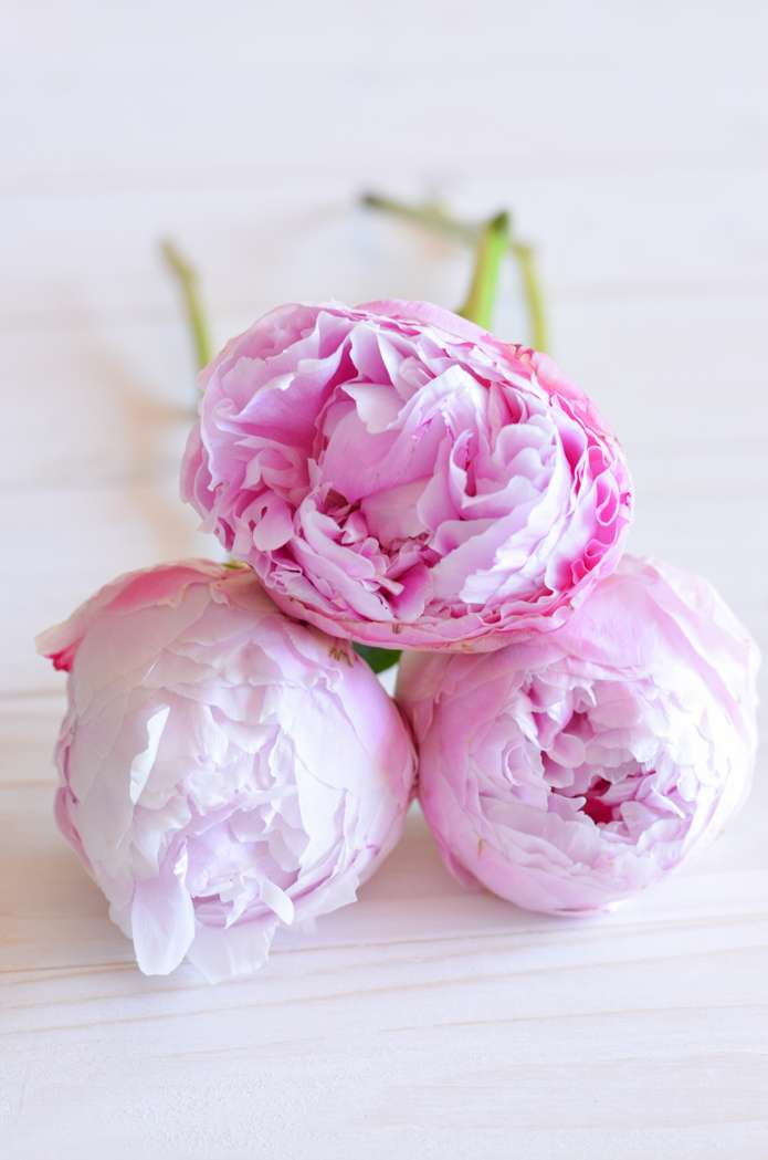 brautstrau mit pfingstrosen selber binden rosa hochzeit teil 1 blumigo. Black Bedroom Furniture Sets. Home Design Ideas