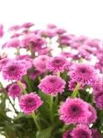 Welche Blumen Gibt Es Im November Schnittblumen Saison Kalender