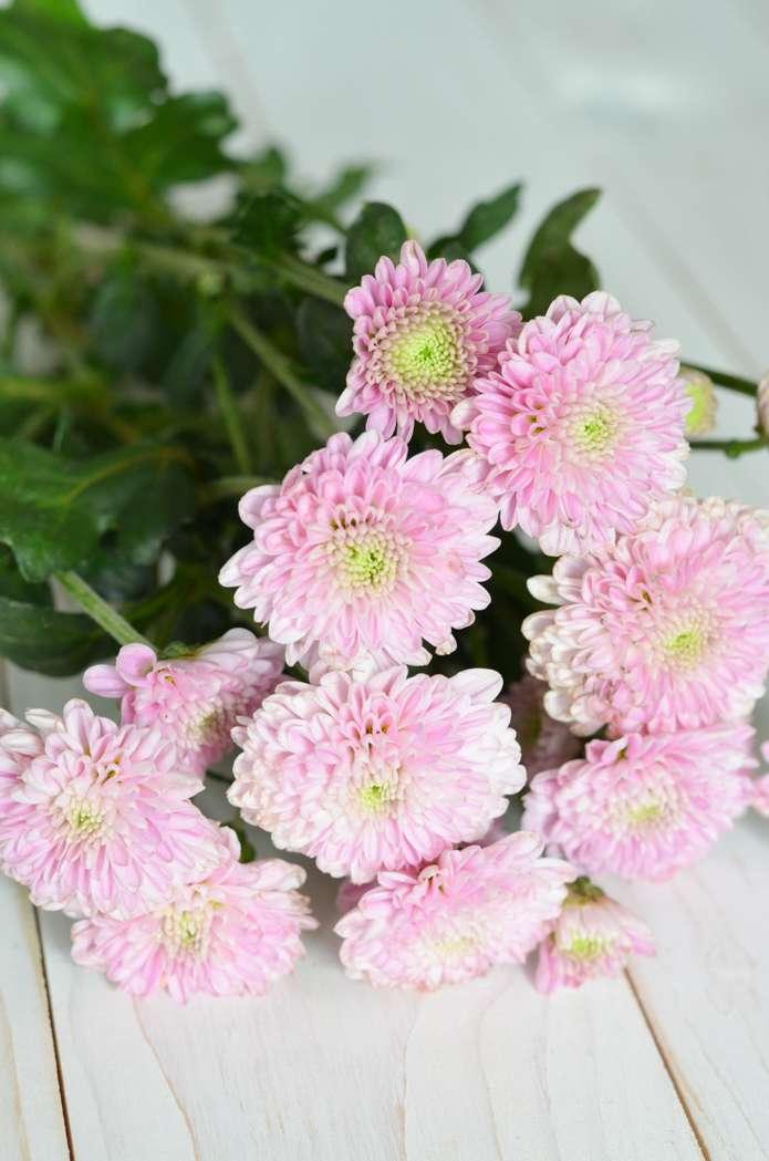022b1e91a43f58 Haarschmuck selber machen – Welche Blumen eignen sich für einen ...