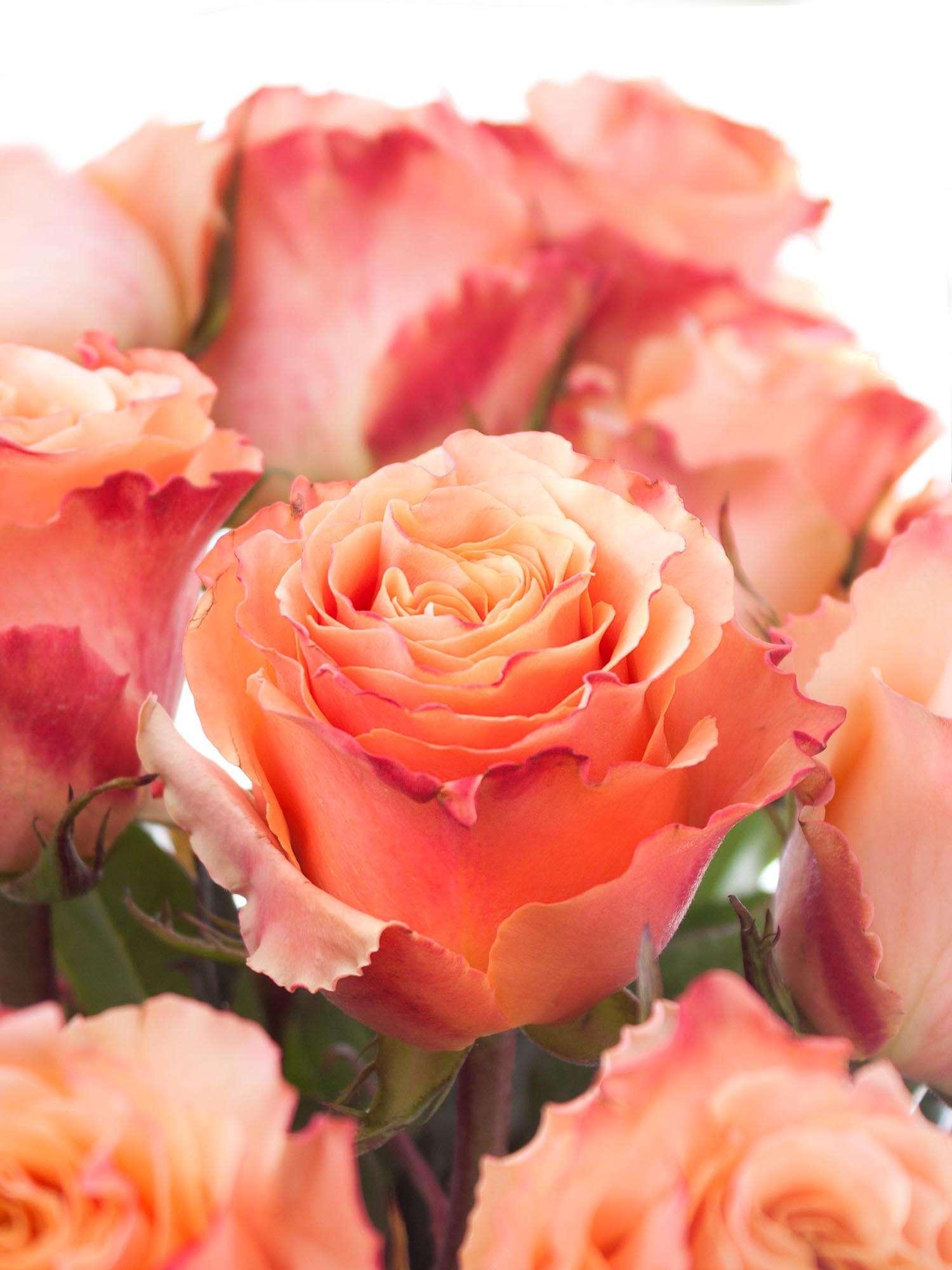 Rosen Carpe Diem Orange Creme