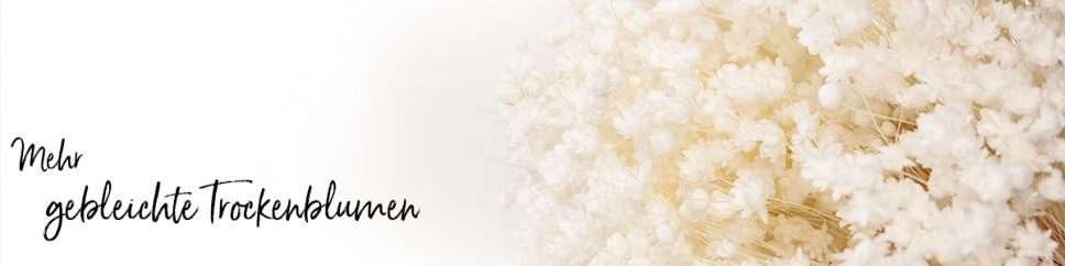 Header Trockenblumen gebleicht mit Titel_2