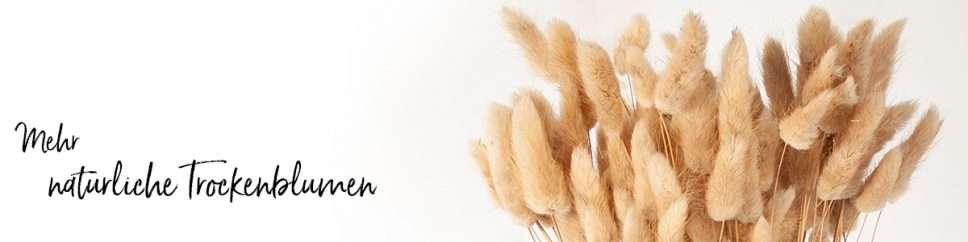 Header Trockenblumen natur mit Titel