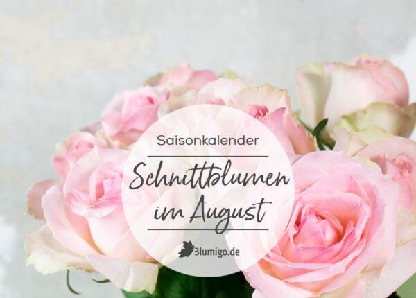 Schnittblumen Saisonkalender Blumen im August_quer