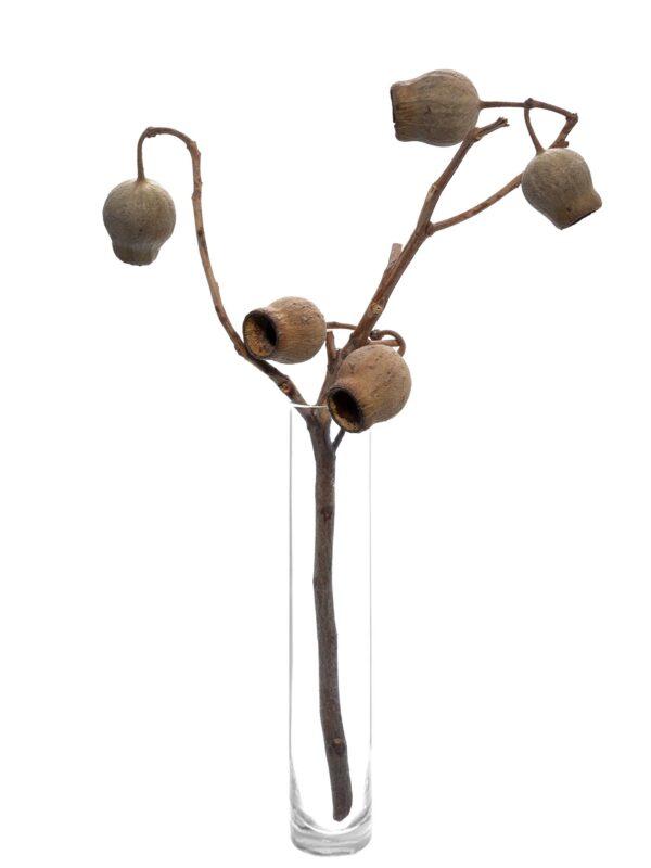 Die Bellgum Glockenfrucht getrocknet natur in einer Vase