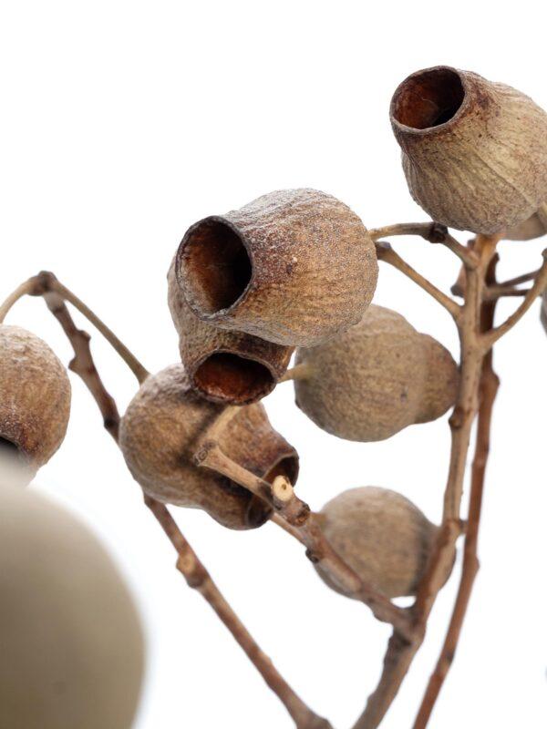 Eine Bellgum Glockenfrucht getrocknet natur
