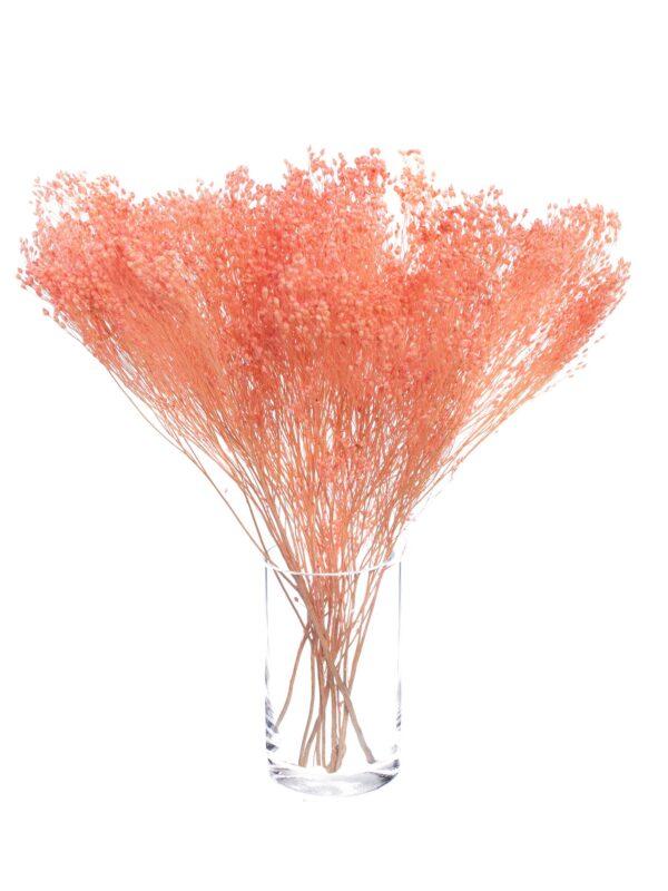 Ein Bund Ginster getrocknet gefärbt rosa stehend in einer durchsichtigen Vase