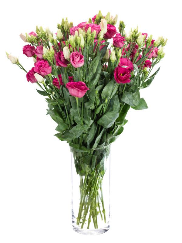 """Lisianthus Eustoma """"Rosita-red"""" in pink als Bund in einer Vase"""