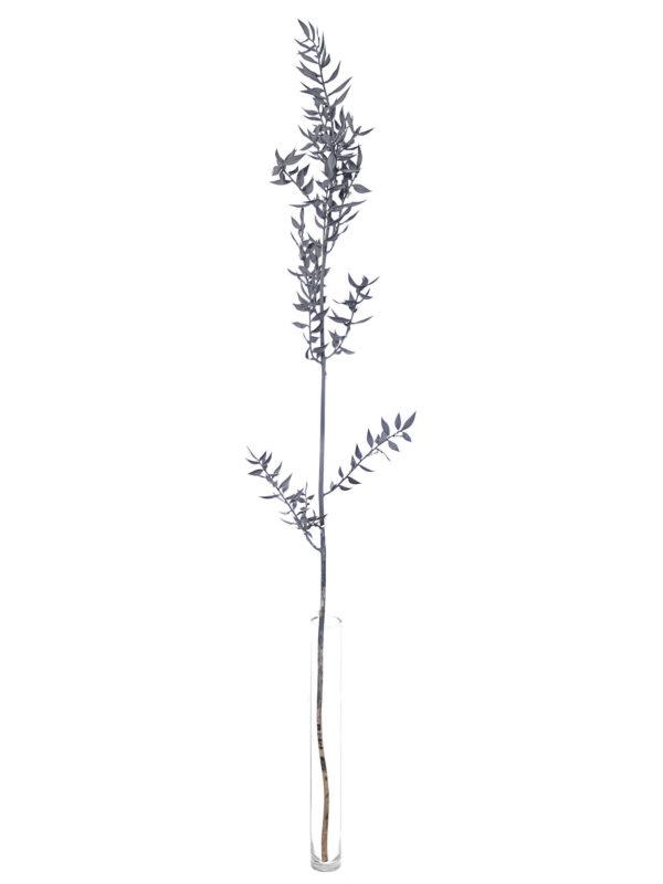 Getrockneter Ruscus in grau als einzelner Stiel