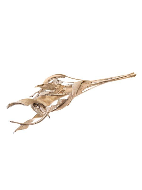 Das Strelitzienblatt getrocknet natur-braun als Bund liegend