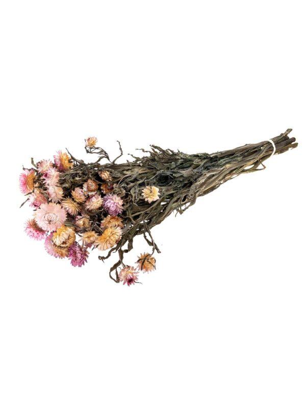 Strohblume Helichrysium getrocknet apricot rosa als Bund liegend