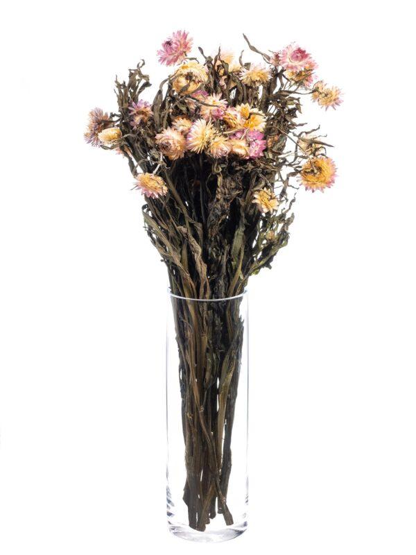 Strohblume Helichrysium getrocknet apricot rosa als Bund stehend in einer Vase