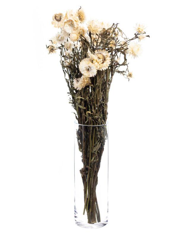 Strohblume Helichrysium getrocknet natur weiss als Bund in einer Vase