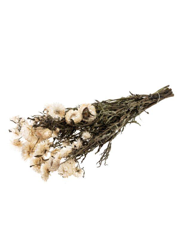 Strohblume Helichrysium getrocknet natur weiss als Bund liegend