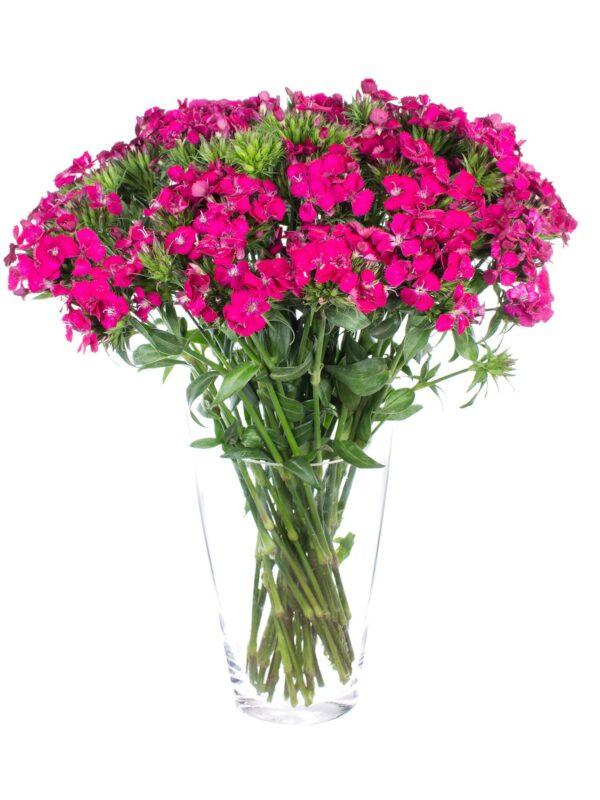 """Ein Blumenstrauß Bartnelken """"Neon-Cherry"""" pink Bund in einer Vase"""