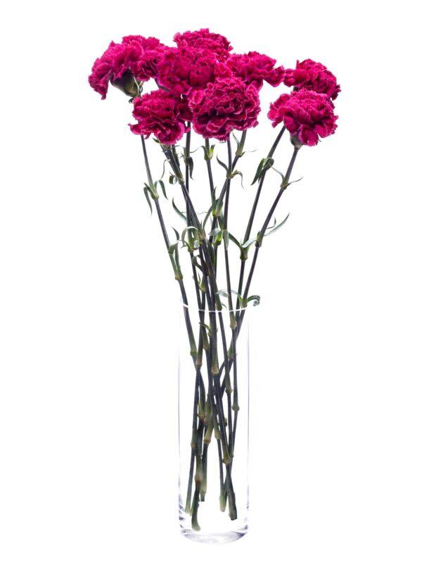 Die Edelnelke Nobbio Party in Dunkelrot-Pink als Bund in einer Vase