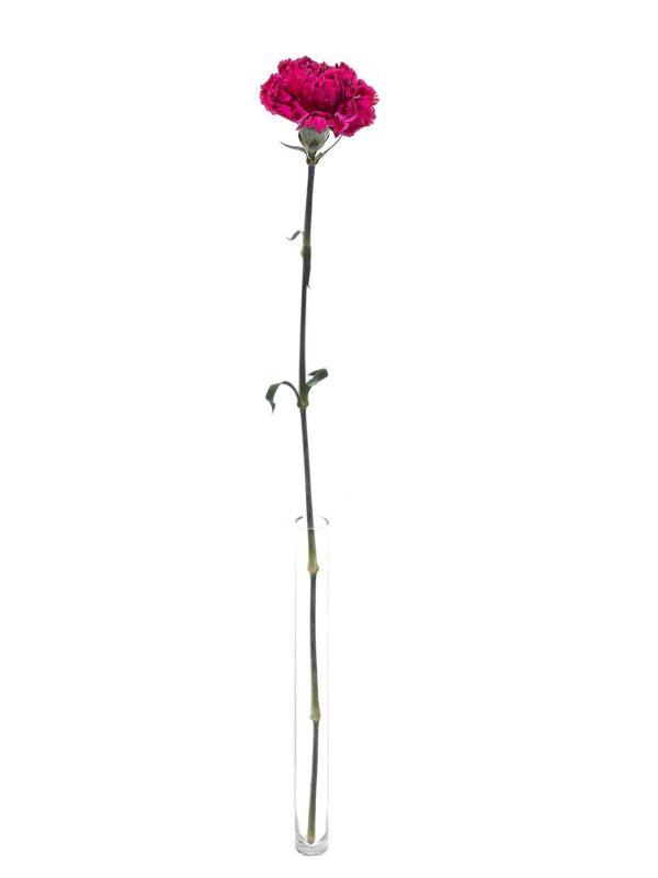 Die Edelnelke Nobbio Party in Dunkelrot-Pink als einzelner Stiel in einer Vase