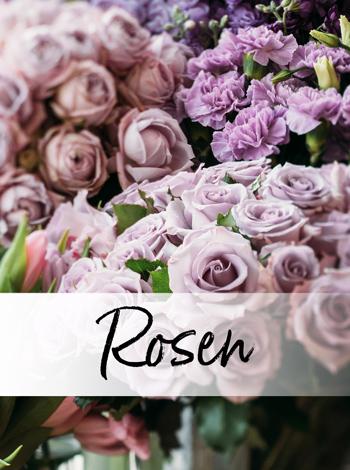 Viele verschiedene Rosen