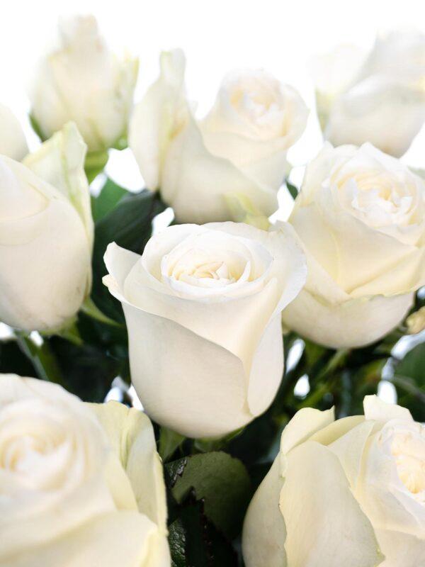 """Detailansicht weißer """"Proud"""" Rosen"""