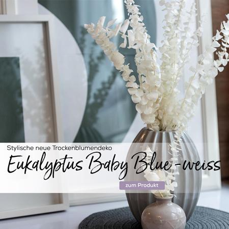 eukalyptus-baby-blue-getrocknet-gebleicht-weiss-slider