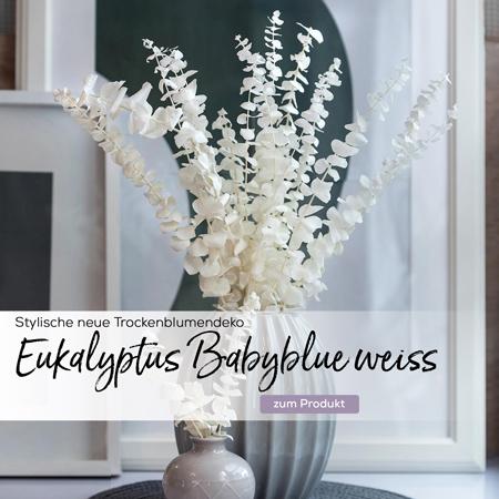eukalyptus-babyblue-getrocknet-gebleicht-weiss-slider